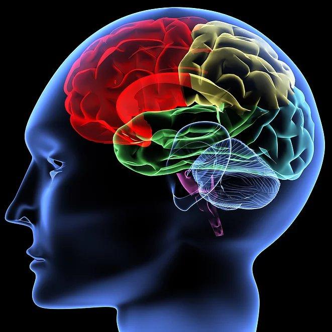 Omaha Charts Stock Analysis - Your Brain On D̶r̶u̶g̶s̶ Money